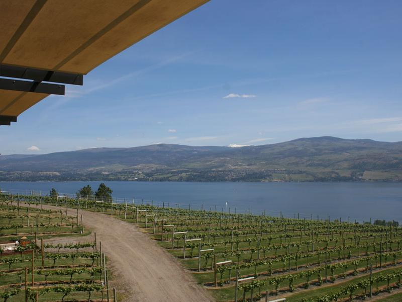 View from the terrace at Mission Hill Winery