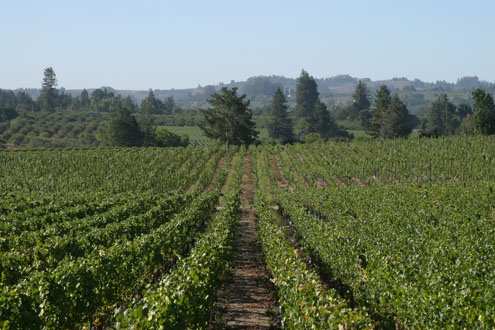 Hallberg Vineyard (Click Image to Enlarge)