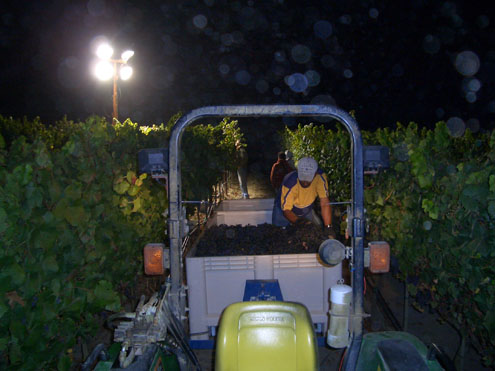 Night Harvest (Click Image to Enlarge)