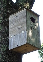 Pahlmeyer Owl Box (click image to enlarge)
